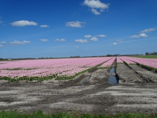 Springtime in the polder